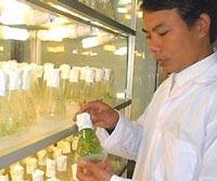 200 giống cây trồng nhân tạo 'made in Vietnam'