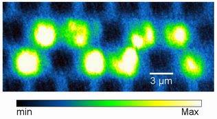 Francesca Intonti và các cộng sự của bà đã tạo ra đường dẫn sóng cong này bằng cách đổ đầy dung dịch nước vào những lỗ chân lông trong những tinh thể lượng tử ánh sáng,