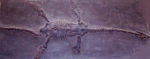 Phát hiện một loài thằn lằn đầu rắn sơ sinh cổ