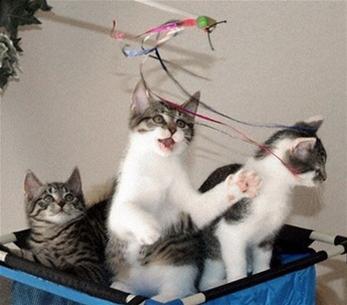 Mèo sinh sản vô tính đầu tiên trên thế giới sinh con