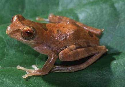 WWF: Phát hiện 52 loài mới ở Borneo