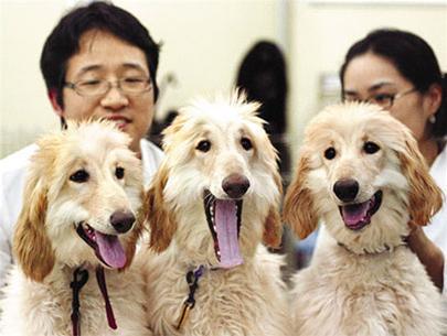 Hàn Quốc tiếp tục nhân bản thành công chó