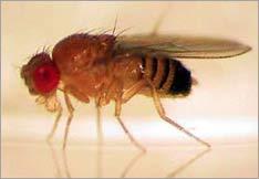 Nhận dạng phân tử nhạy cảm với CO2 ở loài côn trùng