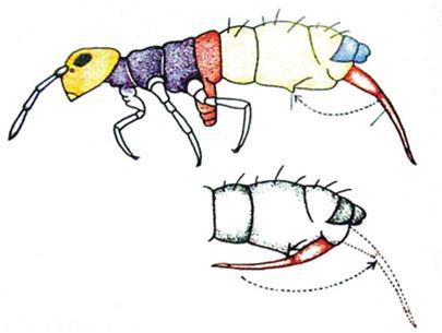 Cần bật của bọ nhảy dùng để làm gì?