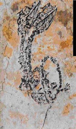 Phát hiện hoá thạch thằn lằn 2 đầu ở Trung Quốc