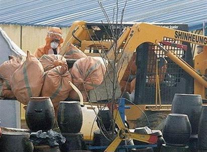 Ai Cập phát hiện thêm 3 người nhiễm cúm gia cầm