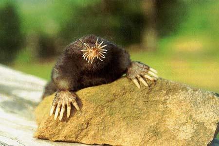 Động vật lưỡng cư có thể đánh hơi dưới nước