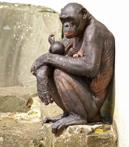 Phôi thai lai tạo giữa người và động vật gây tranh cãi tại Anh