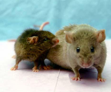 Human-Animal Hybrid - Sản phẩm lai người và động vật