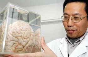 Người Trung Quốc sử dụng não như thế nào?