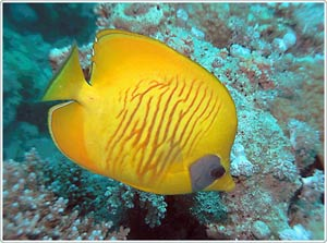 Âm thanh đa dạng của các loài cá