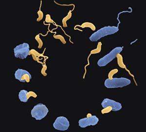 Trong không khí có hơn 1.800 loại vi khuẩn