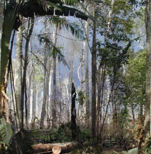 Rừng Amazon có nguy cơ biến thành hoang mạc
