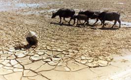 Khánh Hòa: Ngổn ngang nỗi lo trước mùa... đại hạn
