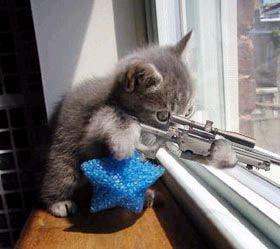 Chuyện tình buồn của một chú mèo