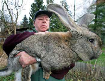 Con thỏ khổng lồ