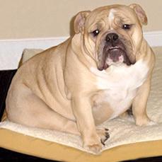 Mỹ có thuốc chữa béo cho chó