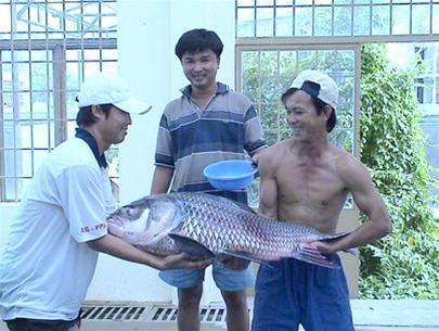 Giữ cá quí cho dòng Mekong