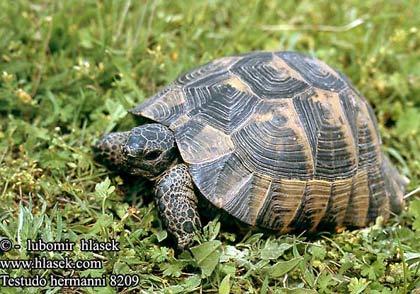 Tây Ban Nha: Mất trộm 94 con rùa quý hiếm