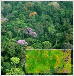 Chất dinh dưỡng trong đất có ảnh hưởng như thế nào đến các khu rừng nhiệt đới?