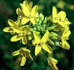 Hiệu ứng nhà kính khiến thực vật ra hoa sớm