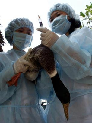 Virus H5N1 đã có biến thể về gen