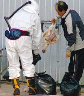 Bùng nổ cúm gia cầm tại Nhật sau 2 năm