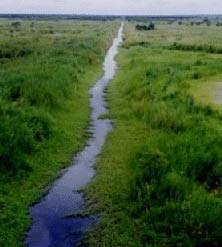 Không nên đào thêm kênh trong rừng