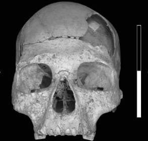 Phát hiện hộp sọ của người hiện đại đầu tiên ở châu Âu