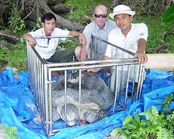 Theo dõi rùa bằng... vệ tinh