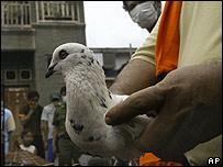 Indo cấm nuôi gia cầm trong thủ đô
