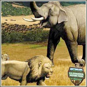 Tại sao thú ăn thịt trên cạn luôn nhỏ hơn voi?