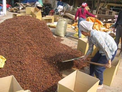 Việt Nam tiếp tục nghiên cứu sản xuất thuốc chống cúm gà