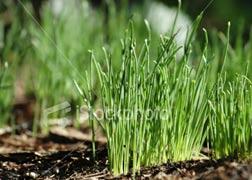 Việt Nam tham gia Hiệp hội bảo hộ giống cây trồng mới