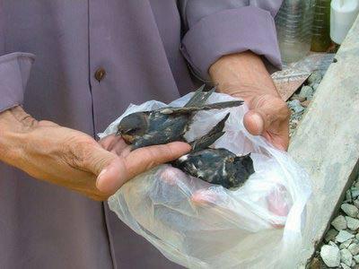 TP.HCM: Chim hoang dã chết hàng loạt không rõ lý do