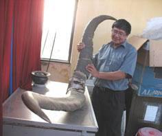 Thêm căn cứ về loài thú khổng lồ có ở Việt Nam