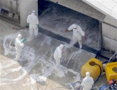 Nhật Bản phát hiện ổ dịch cúm gia cầm mới