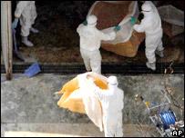 Nhật phát hiện thêm ổ dịch H5N1