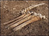 Người ta tìm thấy xương động vật trong các ngôi nhà cổ