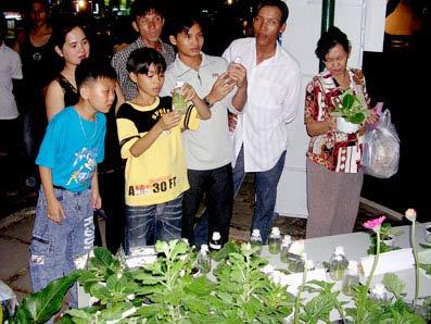 Cách trồng và chăm sóc giống hoa chuông mới