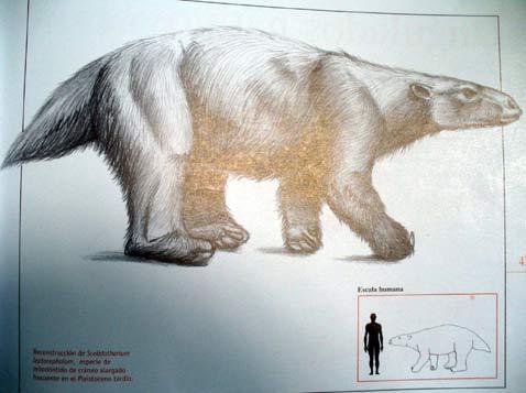 Argentina: Phát hiện dấu chân của một động vật sống cách nay 15.000 năm