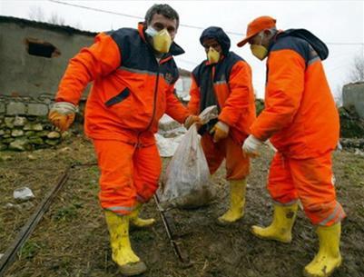 Phát hiện virus cúm gia cầm ở Thổ Nhĩ Kỳ