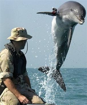 Cá heo chống khủng bố