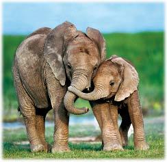 Những câu chuyện về tình yêu của loài vật