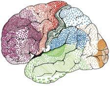Khám phá trí thông minh và thiên tài trong bộ não Lênin