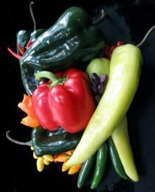 Con người đã biết trồng ớt từ hơn 6.000 năm trước