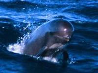 Tây Ban Nha bảo vệ cá voi