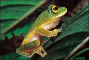 Các chất gây ô nhiễm biến ếch đực thành ếch cái