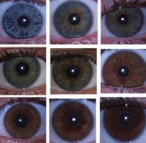 Các nhà khoa học chứng minh không có gen đơn nào quy định màu mắt