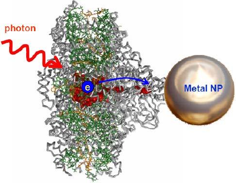 Tăng hiệu suất phản ứng quang hợp bằng các hạt nano